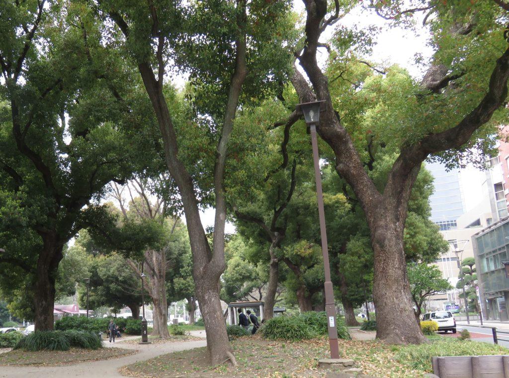 芝 松林公園