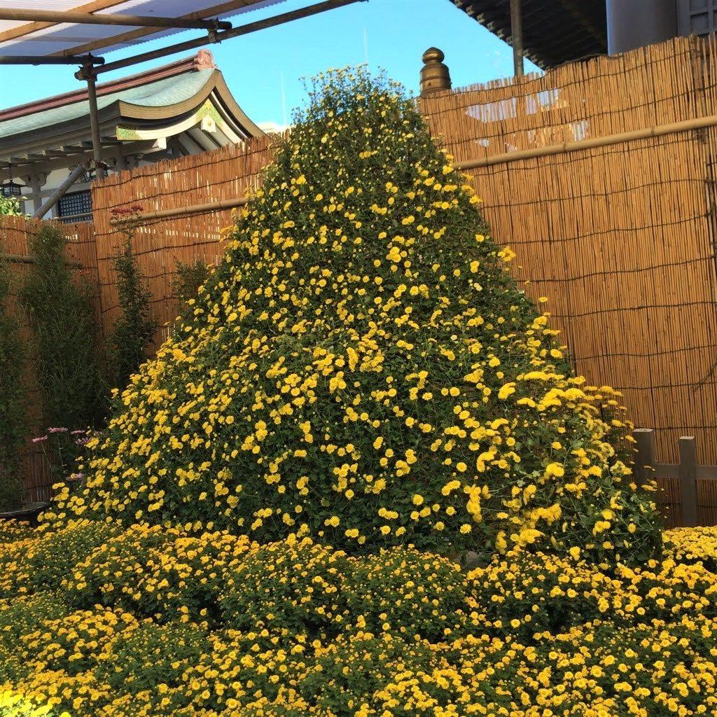 湯島天満宮菊まつり