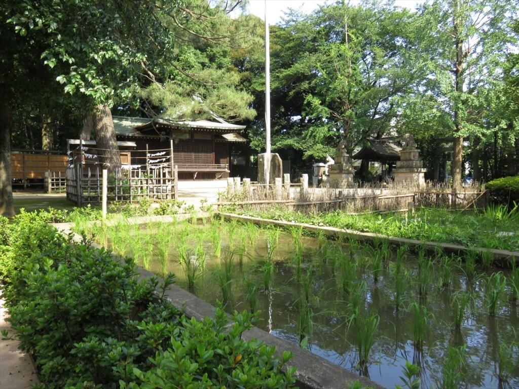 石神井氷川神社新嘗祭