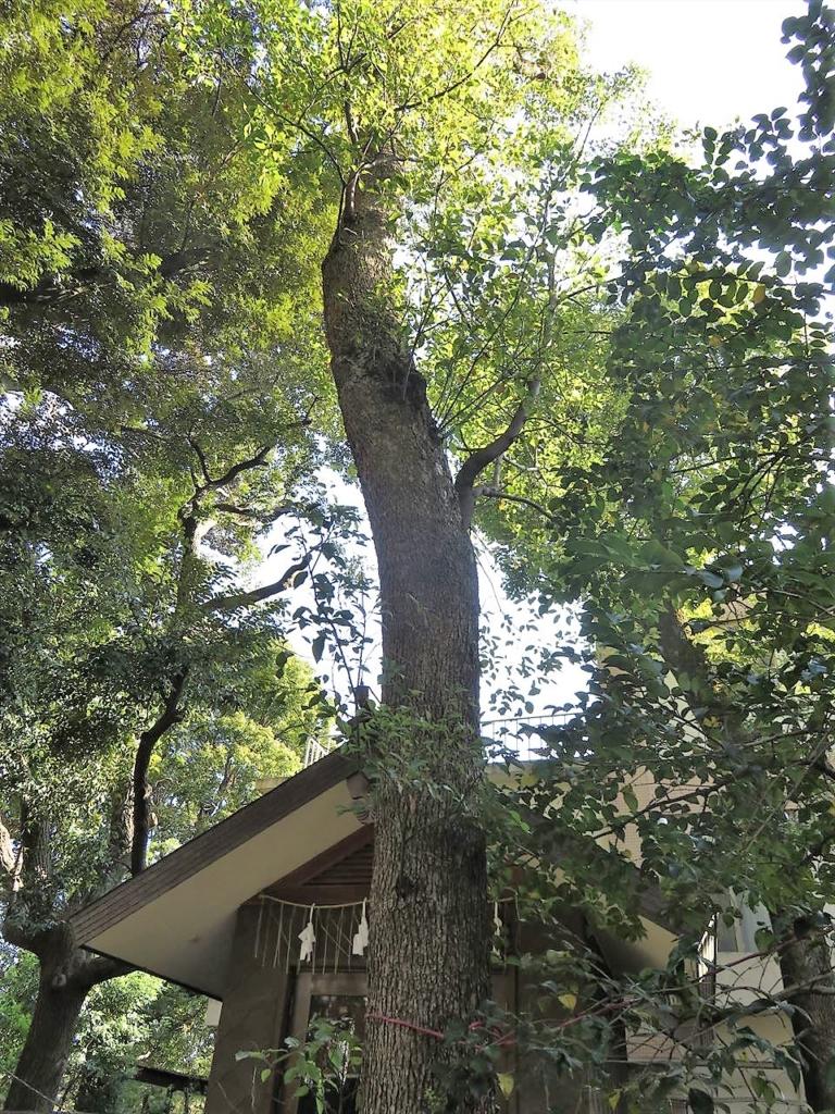 武蔵野八幡宮保護樹林