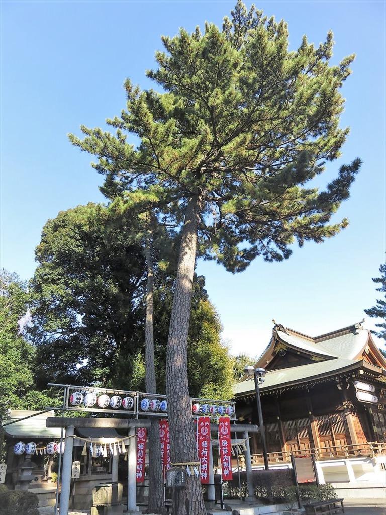 沼袋氷川神社三本願い松