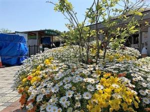 石神井公園花壇