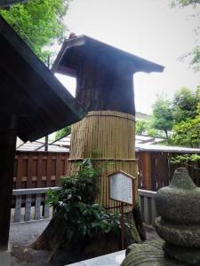 七所神社一本杉